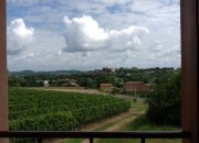Local Vineyards