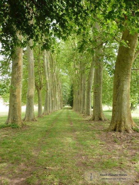 Tree Lined Approach